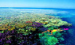 (Day 5) - Day Tour  - Australia's Natural Wonder, the Great Barrier Reef