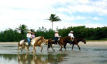 Optional Day Tour (Not Included) - Horseback Riding in the Daintree, Half day
