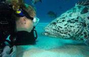 Liveaboard Diving, Spirit of Freedom [DiveSOF4]