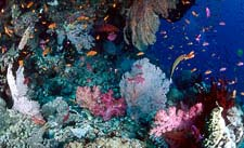 24th Sep - 1st Oct (Days 3 to 10) - 7 Nights Liveaboard Diving Expedition of the Great Barrier Reef