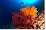 24th - 27th Sep (Days 3 to 6) - 3 Nights - Live Aboard Diving Expedition