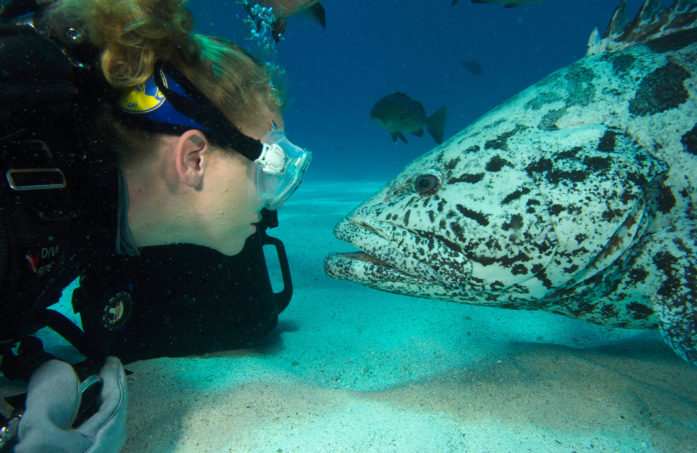 Best Free Diving Locations Across The World : TripHobo