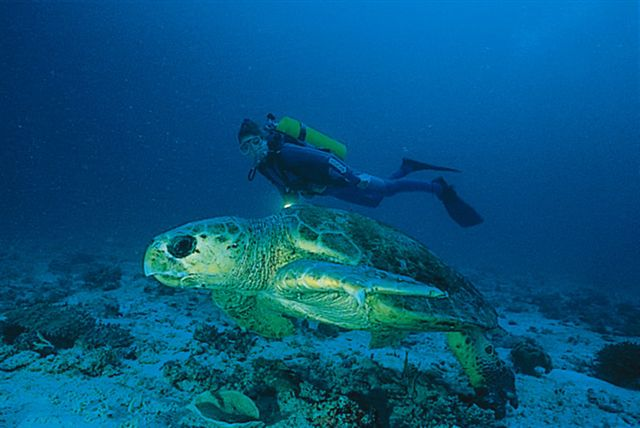 Heron Island Diving