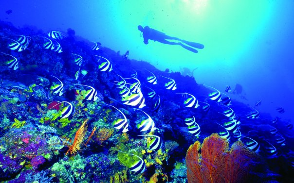 Scuba Diving Fiji Vacations