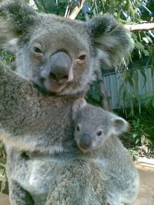 Australia, New South Wales, Sydney, Half Day Tours