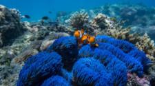 Frankland Islands Great Barrier Reef