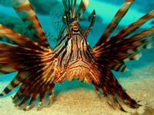 Heron_Island_Dive.jpg