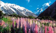 Coach to Queenstown, Christchurch, New Zealand