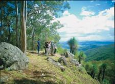 Rainforest Discovery Pass, Rainforest, Australia