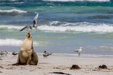 Australia, South Australia, Kangaroo Island