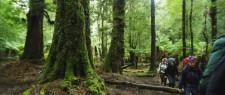 Guided Walk in Tasmania, Australia