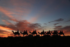 Camel to Sunrise, Ayers Rock, Australia