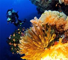 Scuba Dive Fiji