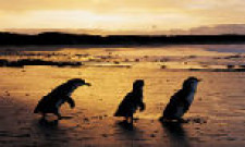 Phillip Island, Melbourne, Australia
