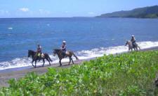 Horse Back Riding in Vanuatu