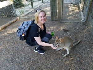Feeding a Kangaroo Travel Agency Review