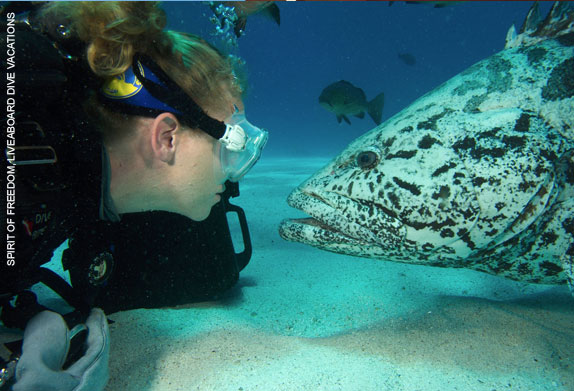 Scuba Diving Trips To Great Barrier Reef