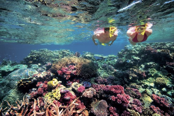 Couple Snorkeling at the Great Barrier Reef