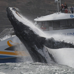 Whale Watching Season Australia