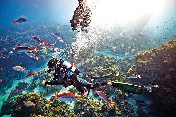 Great barrier reef best australian beaches dive sites - Best place to dive the great barrier reef ...