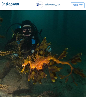 Dive with Leafy Sea Dragon South Australia