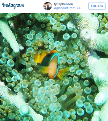 Find Nemo Great Barrier Reef Australia Travel Deals