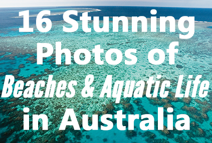 16 Stunning Photos of Beaches and Aquatic Life in Australia