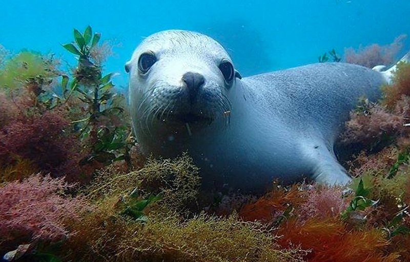Swim with Sea Lions in Port Lincoln in South Australia