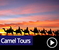 Outback Camel Tours - A camel experience that can't be beaten anywhere in Australia, with the world heritage area of Uluru and Kata Tjuta as our stunning backdrop.