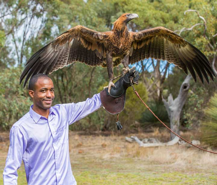Birds of Prey Kangaroo Island Must Do in Australia Experience