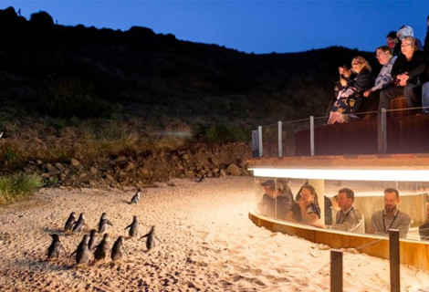 Real Reviews from Families who have traveled to Australia - Phillip Island