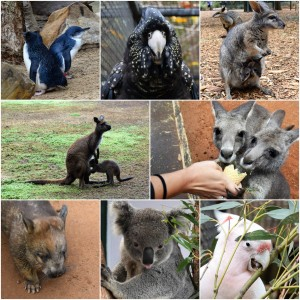 Things to Do in the Blue Mountains Featherdale Wildlife Park Sydney Australia