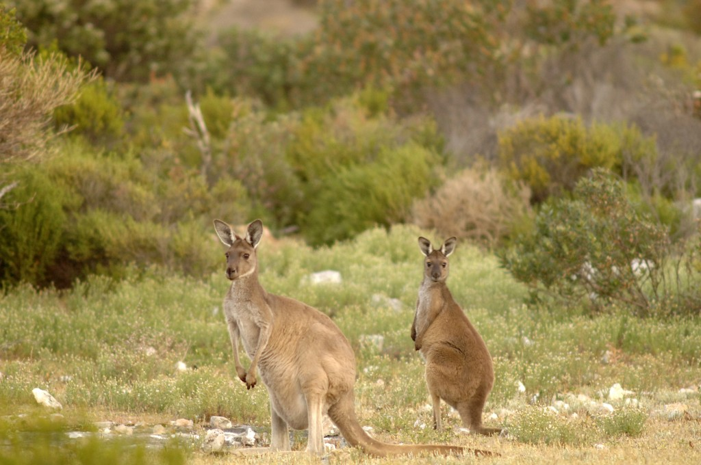 Things to See at Flinders Chase National Park