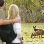 Kangaroo Island - Couple with Kangaroos