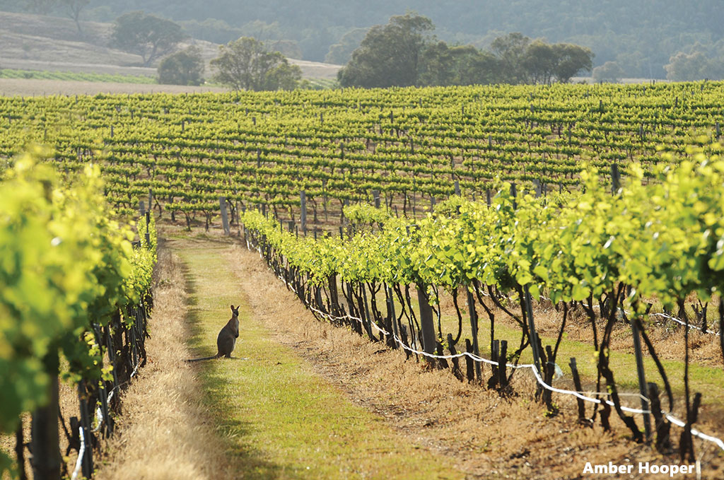 hunter valley driving tour