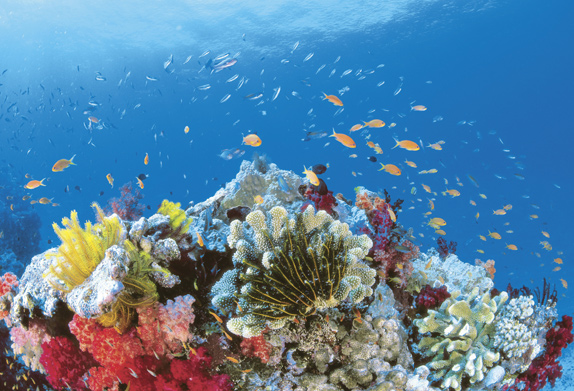 A Guide to the Great Barrier Reef