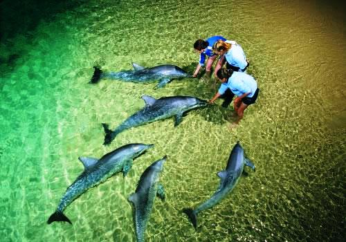 Hand feeding dolphins at Tangalooma Resort