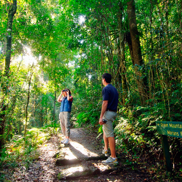 Lamington National Park. Photo Credit: O'Reilly's Rainforest Retreat