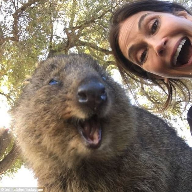 A quokka and Terry Hatcher take a selfie.
