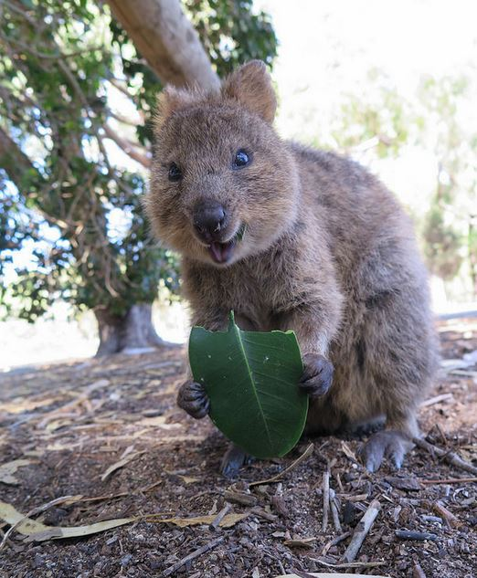11 Unique Australian Animals (and Some You Never Knew Existed!)