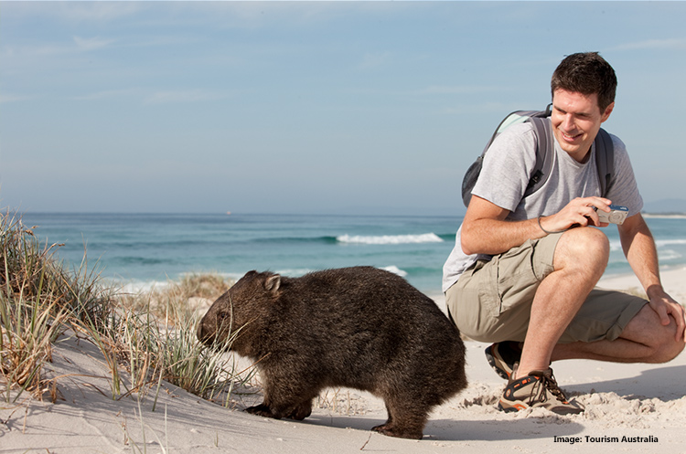 Wombat in Bay of Fires, Tasmania credit Tourism Australia