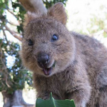 11 Unique Australian Animals