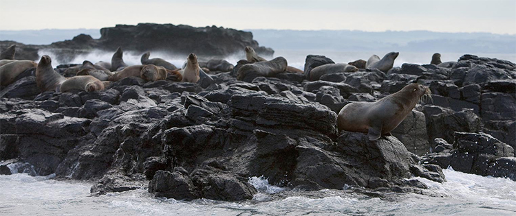 Seal Rocks credit Visit Victoria