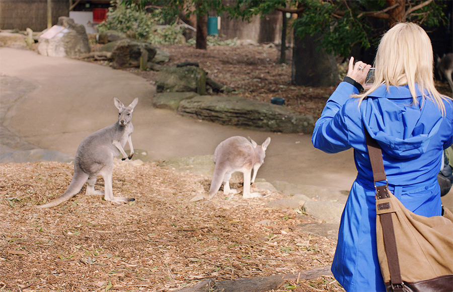 Kangaroos at Taronga Zoo on Australia Travel, Sydney credit Tourism Australia