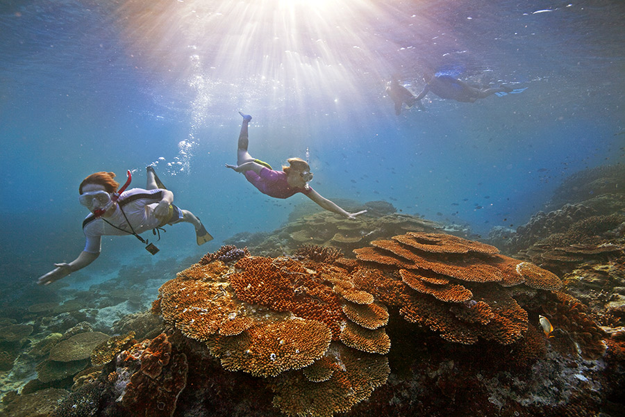 Snorkeling the Great Barrier Reef on Australia Travel