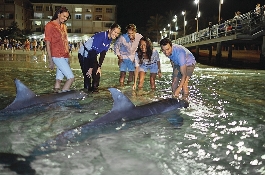 Dolphin Feeding Tangalooma Resort credit Tourism & Events Queensland Islands in Australia