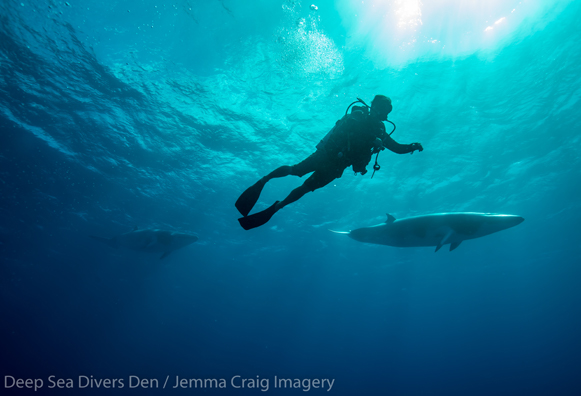 Swimming with minke whales credit deep see divers den jemma craig imagery