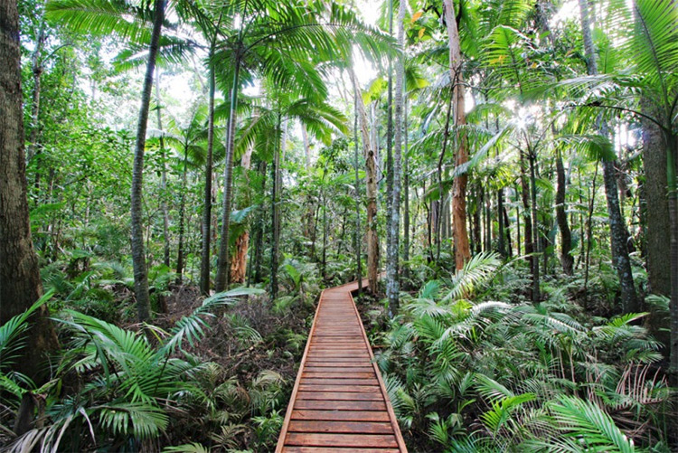 Cairns Botanic Gardens Rainforest Boardwalk credit CBG