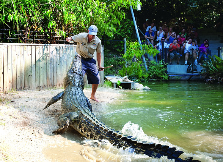 Hartleys Crocodile Adventures is things to do in Cairns credit HCA