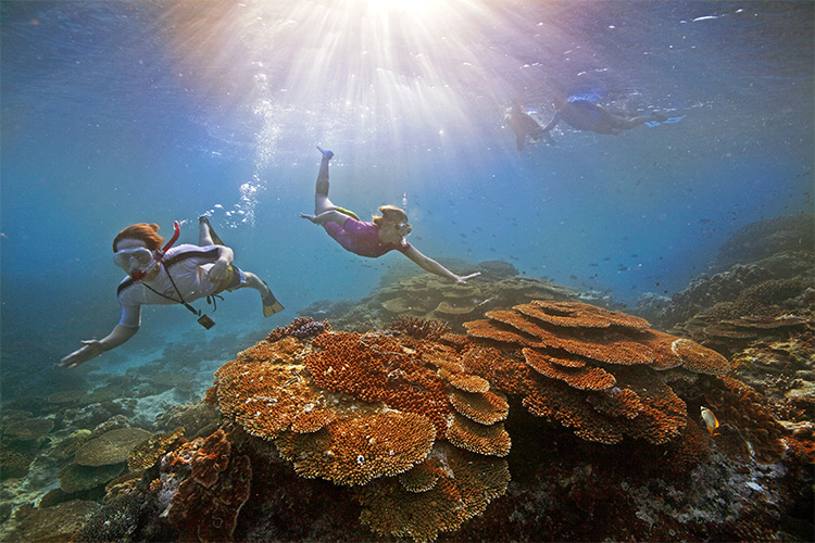 Snorkeling the Great Barrier Reef is one of the best things to do in Cairns credit Tourism Australia